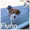 Flynn *