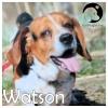 Watson *