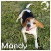 Mandy *