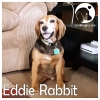 Eddie Rabbit