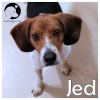 Jed *