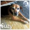 Suzy *