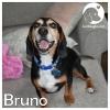 Bruno *