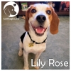 Lily Rose *