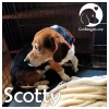 Scotty *