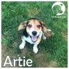 Artie *