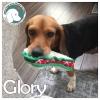 Glory *