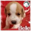 Belle *