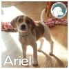 Ariel *