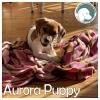 Aurora Puppy *