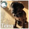 Tiana *