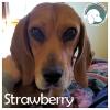 Strawberry *
