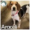 Araceli *