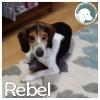 Rebel *