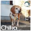 Chika *