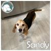 Sandy *