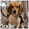 Sadie *