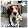 Coppersmith *