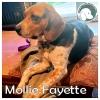Mollie Fayette *