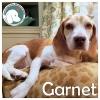 Garnet *