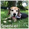 Spencer *