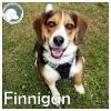 Finnigan *