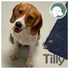 Tilly *