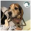 Bessie *