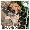 Havana *