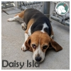 Daisy Isla *