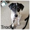 Tracker *
