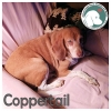 Coppertail *