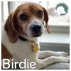Birdie *