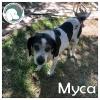 Myca *