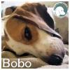 Bobo *