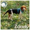 Zandy *