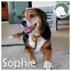 Sophie *