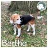 Bertha *