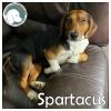 Spartacus *