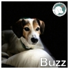 Buzz *