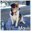 Mavis *