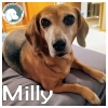 Milly *