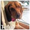 Tessie *