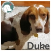 Duke *