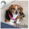 Rosie *