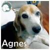 Agnes *