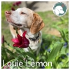 Louie Lemon *
