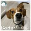 Baxter *