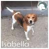 Isabella *