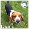 Diane *